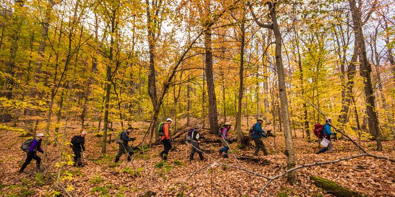Rideau Trail Association hiking in Gatineau Park